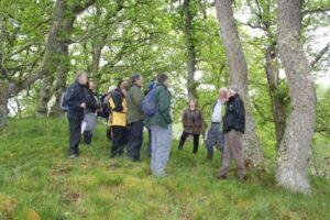 Loch Pityoulish oaks copyright C Mills 2012
